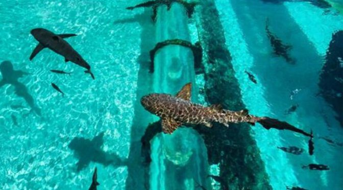 Dive into a shark adventure on your family vacation