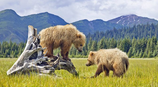 15 Top-Rated Tourist Attractions in Alaska