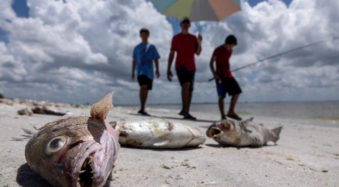 State Of Emergency Declared In Florida As Toxic 'Red Tide' Algae Bloom Wreaks Havoc
