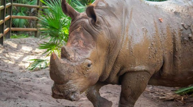 Child falls into rhinoceros exhibit at Florida zoo