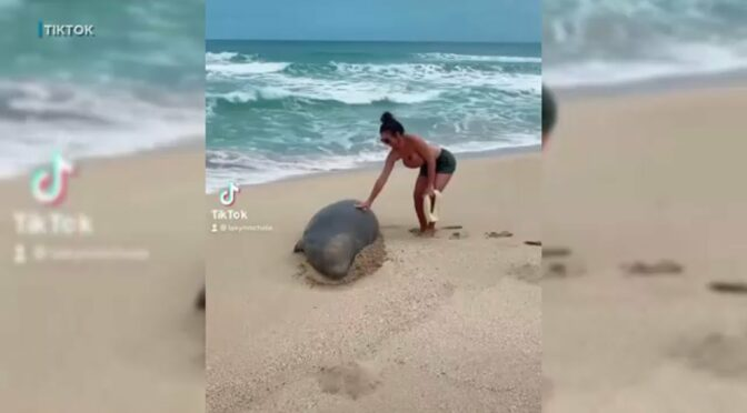 Hawaii issues stern warning after viral video prompts wildlife harassment investigation | ABC7